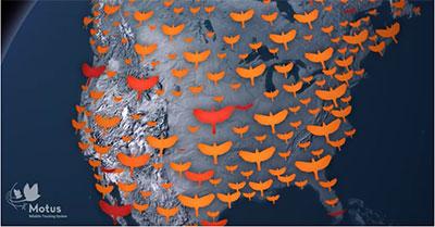 MOTUS Wildlife Tracking System Canada