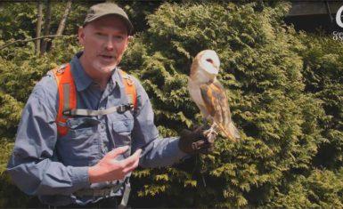 Ontario conservation videographer