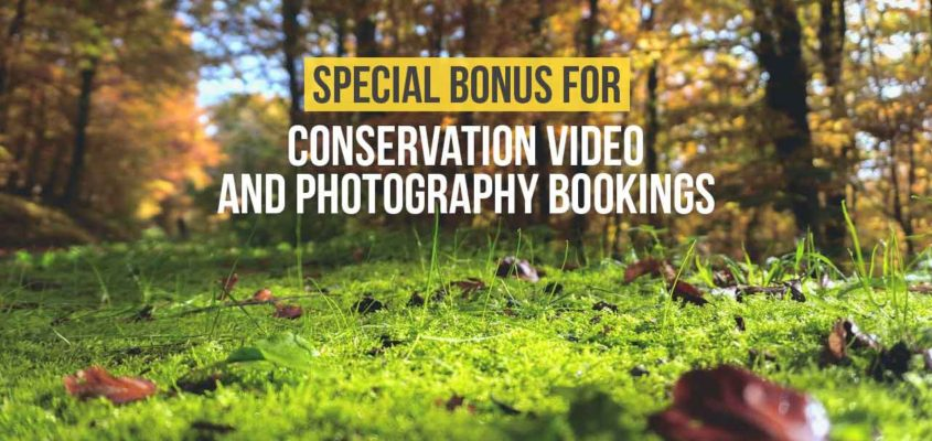 Environmental visual storyteller Ontario Canada