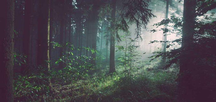 forest bathing canada